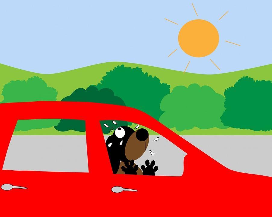 chaleur peut on bris la vitre d 39 une voiture pour sauver un animal. Black Bedroom Furniture Sets. Home Design Ideas